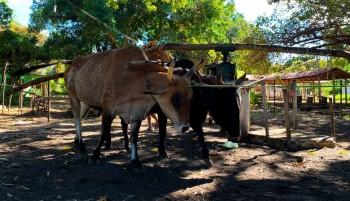 Visite o temático Sítio Buritizinho no município de Pedro II