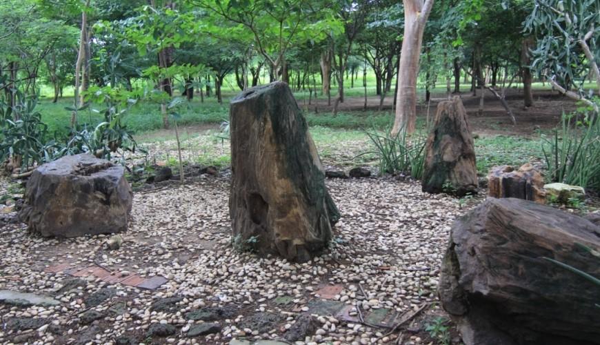Teresina abriga a única floresta fóssil do Brasil que fica numa área urbana